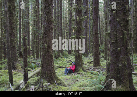 Olympic National Park Washington USA. Man moss-covered Hemlock and Spruce trees - Stock Photo