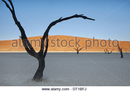 Namib-Naukluft National Park Namibia Dead camelthorn trees Acacierioloba in Dead Vlei - Stock Photo