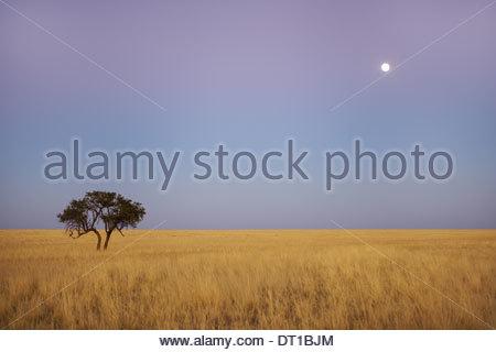 Namib-Naukluft National Park Namibia moon grassy plains Namib-Naukluft National Park - Stock Photo