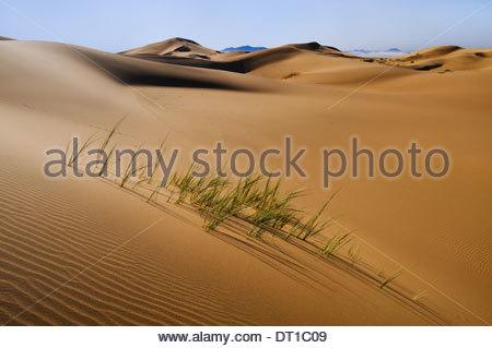 Namib-Naukluft National Park Namibia Grasses in sand dunes Namib-Naukluft National Park - Stock Photo