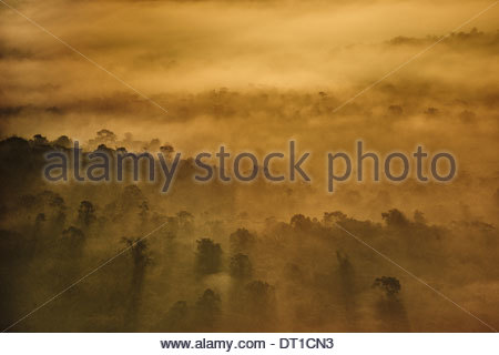 Cockscomb Basin Belize Sunrise rainforest aerial view Cockscomb Basin - Stock Photo