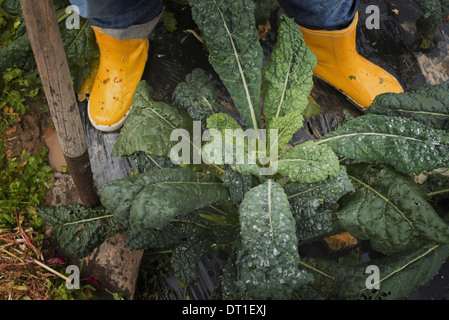 Organic Farmer at Work A person's feet in yellow work boots - Stock Photo