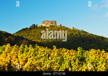 Hambach Castle and Vineyard landscape, near Neustadt, German Wine Route, Rhineland-Palatinate, Germany, Europe - Stock Photo