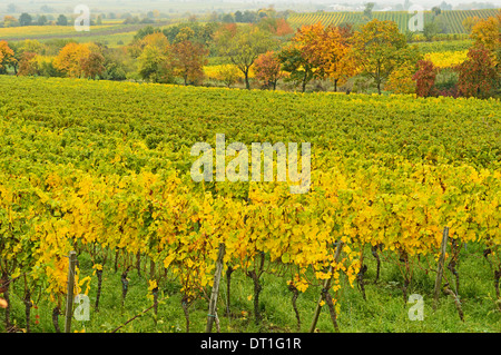 Vineyard landscape, near Neustadt, German Wine Route, Rhineland-Palatinate, Germany, Europe - Stock Photo
