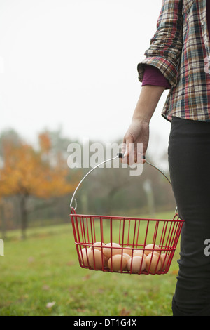 Organic farm A woman carrying a clutch of freshly laid hen's eggs in a wire basket - Stock Photo