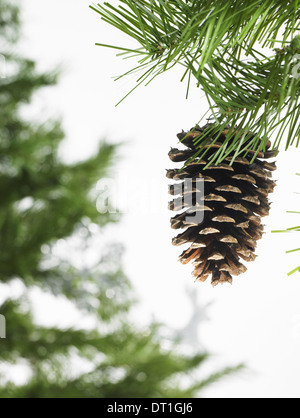 Green leaf foliage and decorations A pine tree branch with green needles Christmas decorations A pine cone - Stock Photo