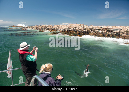 Tourists photographing a fur seal (Arctocephalus pusillus) jumping out of the water, Gansbaai, Western Cape, South - Stock Photo