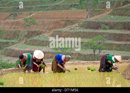 Flower Hmong women working in the rice field, Bac Ha area, Vietnam, Indochina, Southeast Asia, Asia - Stock Photo