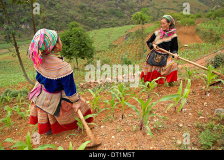 Flower Hmong ethnic woman working in the fields, Bac Ha area, Vietnam, Indochina, Southeast Asia, Asia - Stock Photo