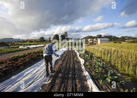 Man working in the fields social care and work project the Homeless Garden Project Sowing seed in the ploughed furrows - Stock Photo