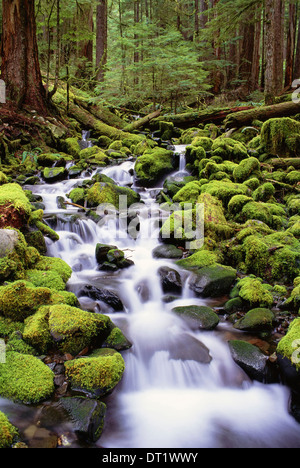 A stream flowing over moss covered rocks in the Olympic National Park in Washington State - Stock Photo