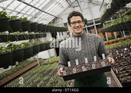 A man holding trays of young plants and seedlings - Stock Photo