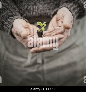 A person in a commercial glasshouse holding a small plant seedling in his cupped hands - Stock Photo