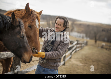 A man fixing a post and rail fence around a horse paddock - Stock Photo