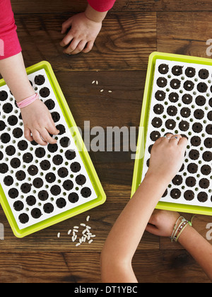 View from overhead of two children planting seeds into a seed growing tray - Stock Photo