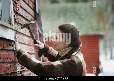 An organic farm in upstate New York in winter A woman with a hammer repairing the shingles on a barn - Stock Photo