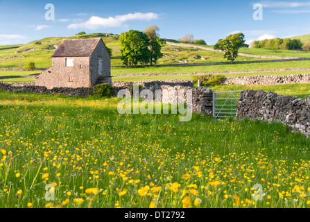 Buttercup Meadow & Stone Barn , Near Alstonefield, Peak District National Park, Derbyshire, England, UK - Stock Photo