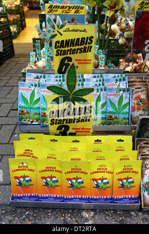 Cannabis plant seed starter kit souvenirs at the Flower Market in Amsterdam, Holland - Stock Photo