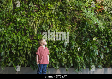 city in spring An urban lifestyle A young boy looking up at a wall covered with lush foliage ferns and bright green - Stock Photo