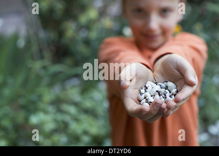 A young boy holding out a handful of dried beans - Stock Photo