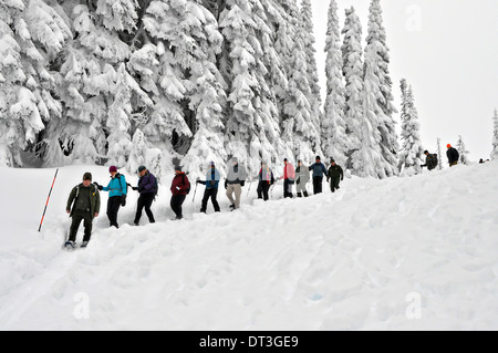 US Interior Secretary Sally Jewell snowshoes through frozen alpine wilderness during a visit to Mount Rainier National - Stock Photo