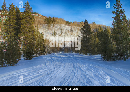 Several trails of snowmobile tracks in a state park in Aspen, Colorado. - Stock Photo