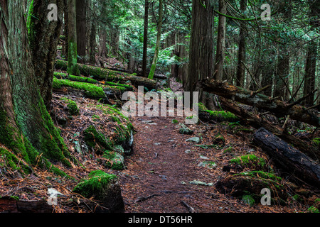 Trail through a dense temperate rain forest on Vancouver Island, Canada - Stock Photo