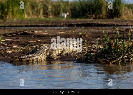 Crocodile Market, Lake Chamo, Arba Minch, Ethiopia - Stock Photo