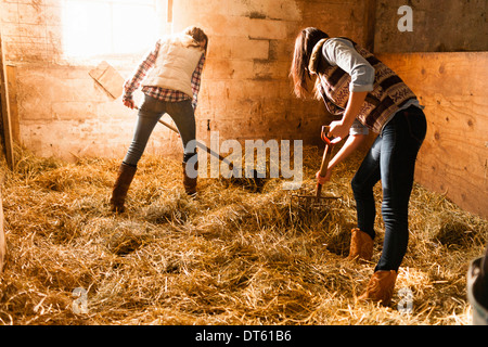 Two young women making straw bed in stable - Stock Photo