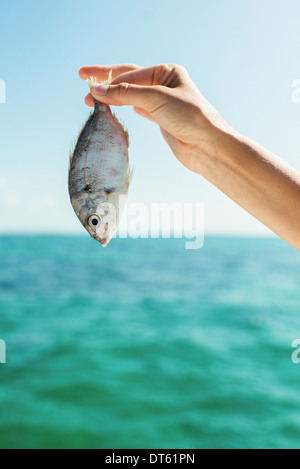 Close up of female hand holding up a fish - Stock Photo