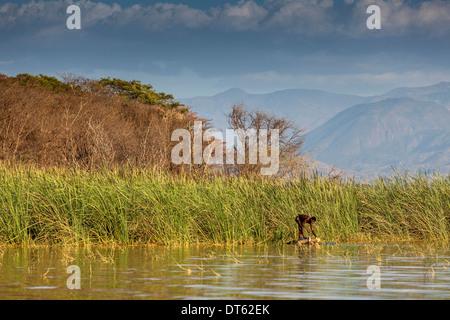 Fisherman, Lake Chamo, Arba Minch, Ethiopia - Stock Photo