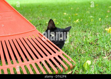 little black cat hiding behind a garden rake - Stock Photo
