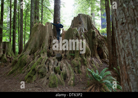 Boy standing on tree stump, Redwoods National Park, California, USA - Stock Photo