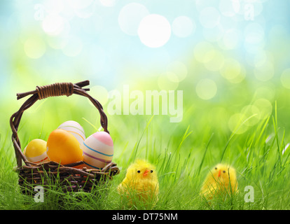 Yellow Easter chicks and basket of Easter eggs in a field - Stock Photo