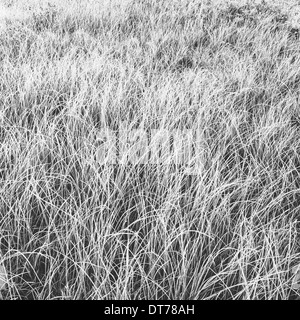 Frost covered grasses in a meadow in Mount Rainier national park. - Stock Photo