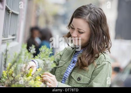 A woman tending a window box on a city street. Spring flowers.