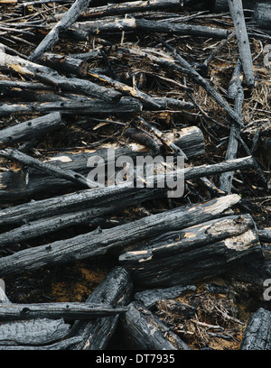Burned logs and debris from clear cut forest, Olympic NF - Stock Photo