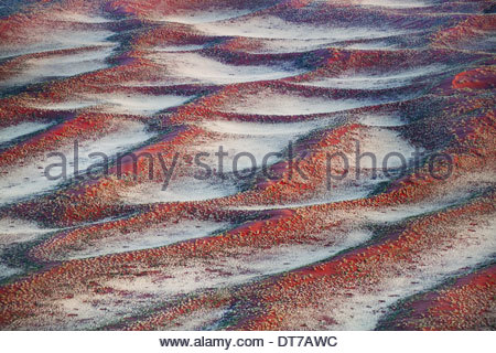 An aerial view over sand dunes with sparse vegetation in NamibRand Nature Reserve Namibia NamibRand Nature Reserve - Stock Photo