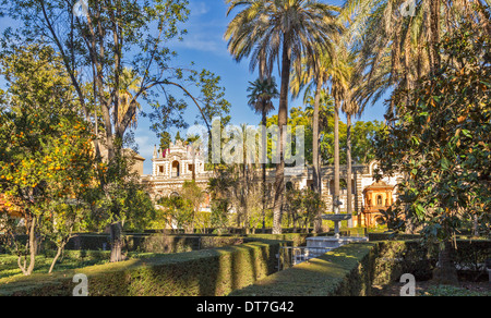 ALCAZAR OF SEVILLE SPAIN THE GARDENS WITH PALM TREES AND ORANGES ON TREES IN DECEMBER - Stock Photo