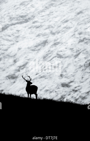 Red Deer stag (Cervus elaphus) silhouetted against a snowy mountain converted to black and white. Glen Etive, Glencoe, Highlands Stock Photo