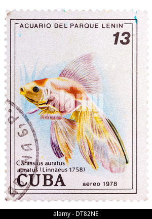 CUBA - CIRCA 1978: A postage stamp printed in the Cuba shows carassius auratus auratus - asian goldfish, circa 1978 - Stock Photo