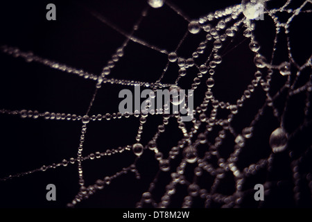 Ultra macro of raindrops on a spider web on black background - Stock Photo
