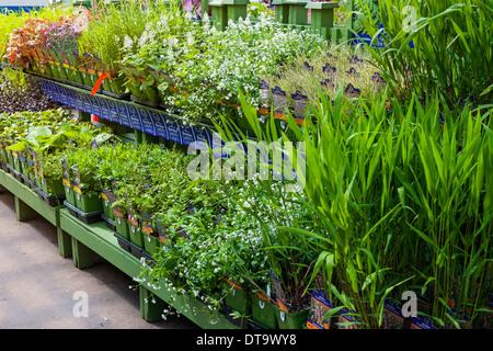 Shelves of various spring plants for sale in garden nursery - Stock Photo