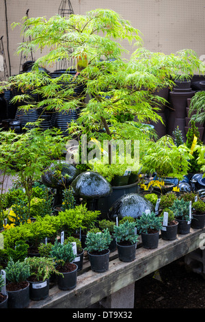Assorted potted plants for sale in garden nursery - Stock Photo