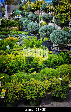 Assorted trees and shrubs for sale in garden nursery - Stock Photo