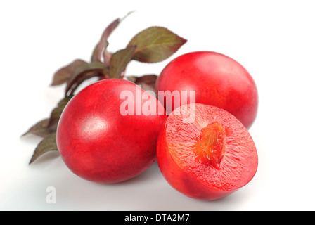 Fruit of red plum isolated on white. Prunus cerasifera var. pissardii - Stock Photo