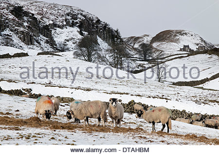 Holwick Scars near Middleton-in-Teesdale, Co Durham, UK. 13th February 2014 UK weather. Snow in the North Pennine - Stock Photo
