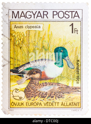 HUNGARY - CIRCA 1980: A stamp printed in HUNGARY shows a Northern Shoveler (Anas clypeata), from series bird's nest, - Stock Photo