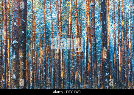 Winter forest trees nature snow woods background - Stock Photo