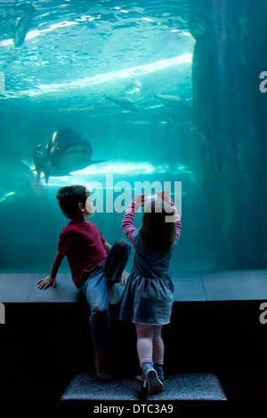 Young brother and sister photographing on camera phone at aquarium - Stock Photo